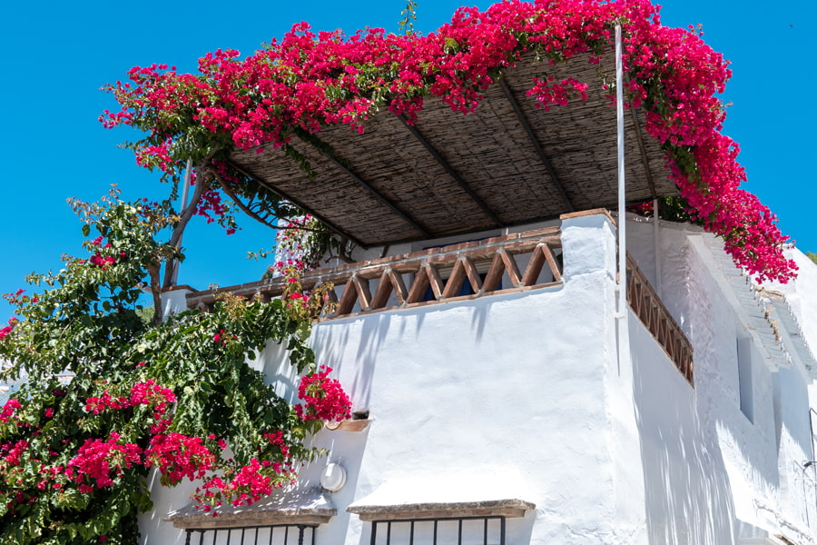 Red bougainvillea terrace